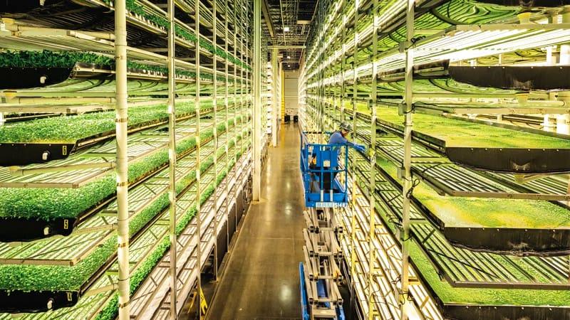 Работник обслуживает вертикальные фермы в компании Aerofarms