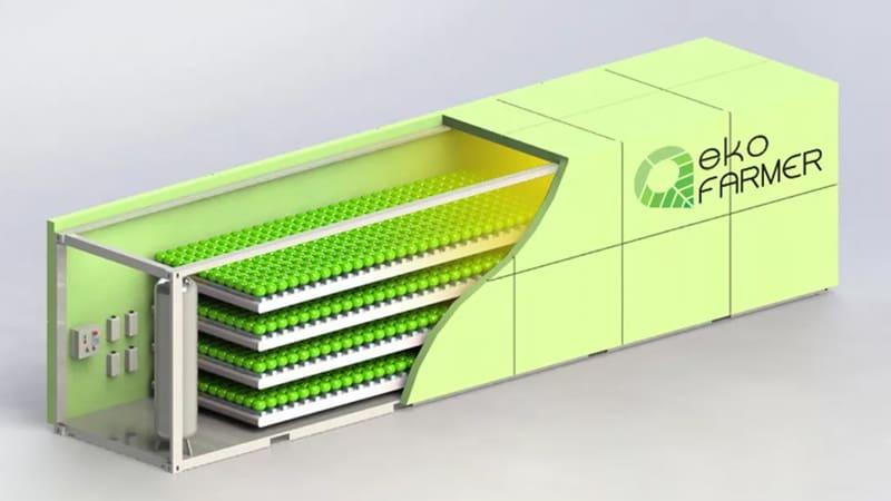 Выращивание салатов и зелени в контейнере внутри которого размещены вертикальные фермы