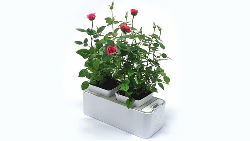 Установка Fashion Grower с розами