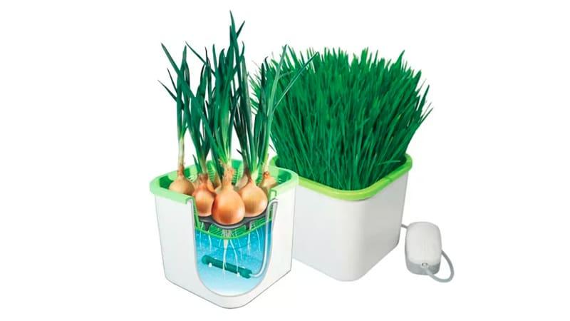 Установка для проращивания злаковых в домашних условиях - Здоровья клад