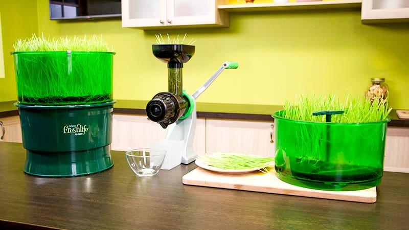 Процесс переработки ростков пшеницы в установке FreshLife FL-3000