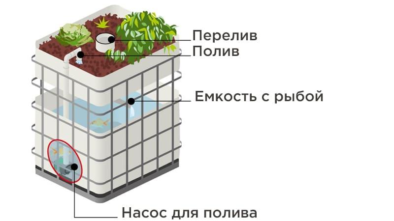 Схематическое изображение принципа системы аквапоника