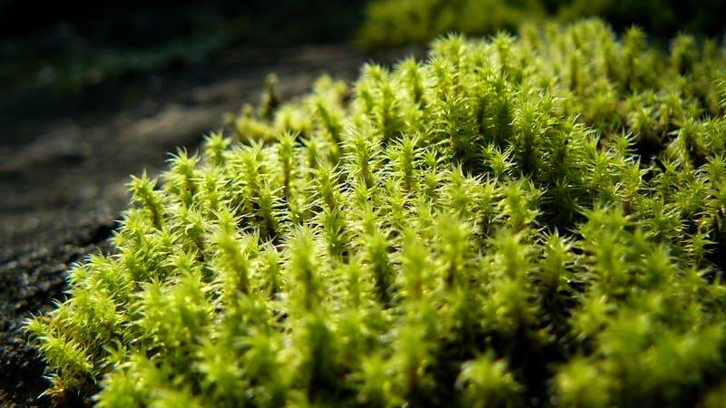 Мох в лесу, который можно использовать в качестве субстрата