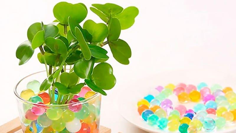 Гидрогель можно не только использовать в качестве игрушки. Он отлично подойдет для поддержания влажности в корневой зоне растений.
